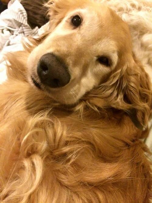 Best 25+ Golden retriever rescue ideas on Pinterest ...