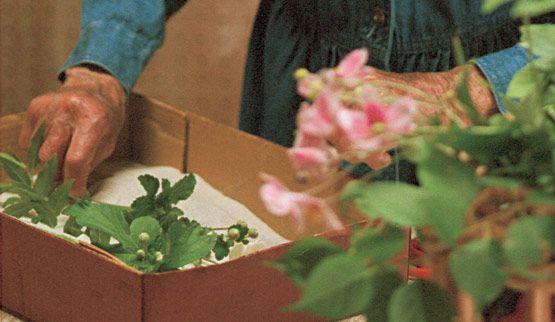 Aprende a secar flores frescas utilizando arena... aquí tienen un tutorial con fotos!