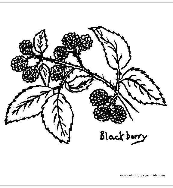 Blackberry Leaves Leaf Color Page Coloring Pages Plate Sheetprintable