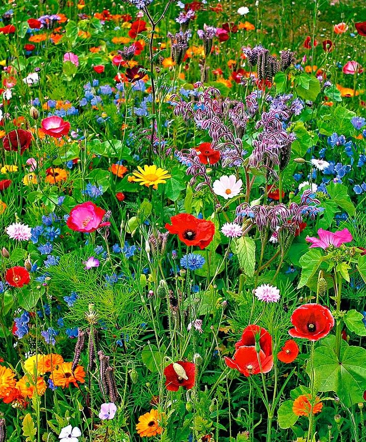 TakeCareOfyou: This is just the sort of garden that hummingbirds and butterflies will flock to! And, I'm sure there will be lots of insects for other birds to eat.