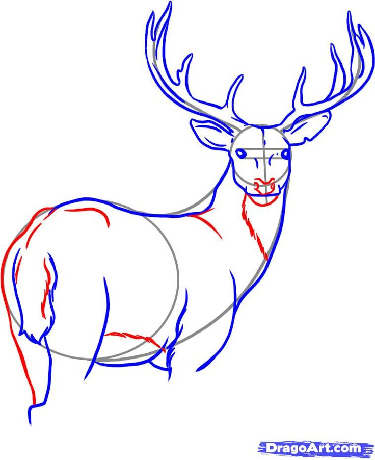 How to draw a buck like an artist  Art Ed Central loves Dragoart