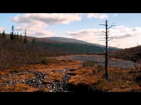 Urho Kekkonen National Park, Finland - Autumn - YouTube