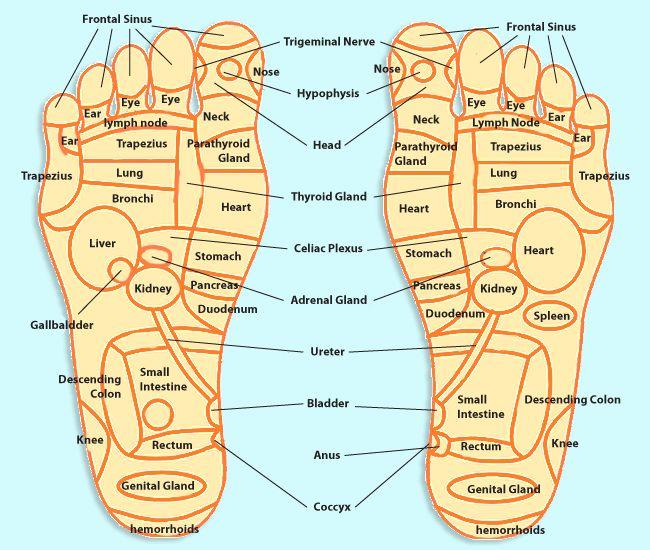 Pressure Points Diagram Massage Fender Jazzmaster Wiring Foot Refelxology Trivia Reflexology In Hawaii Oasis Spa General Health