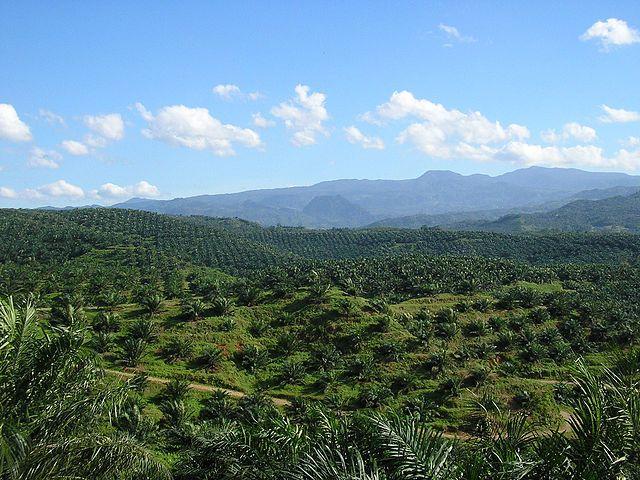 Palmoljeplantering istället för regnskog. Foto: Achmad Rabin Taim from Jakarta, Indonesia - P3260481, CC BY 2.0