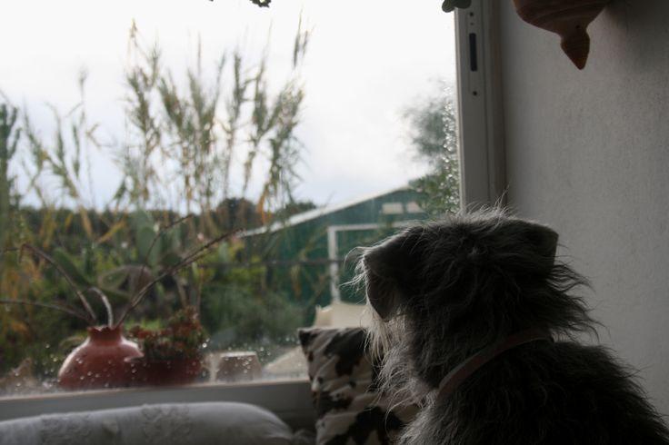 Klara kuckt raus in den Regen....