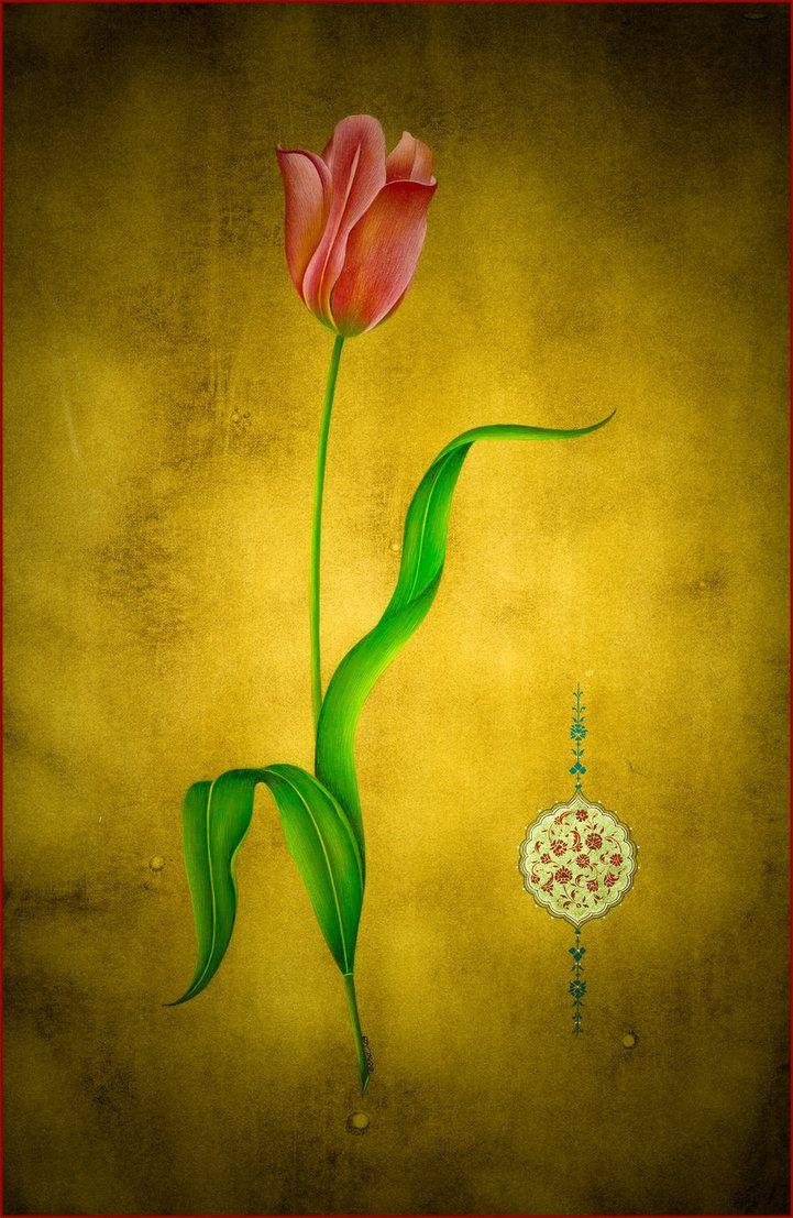 tulip by esraart