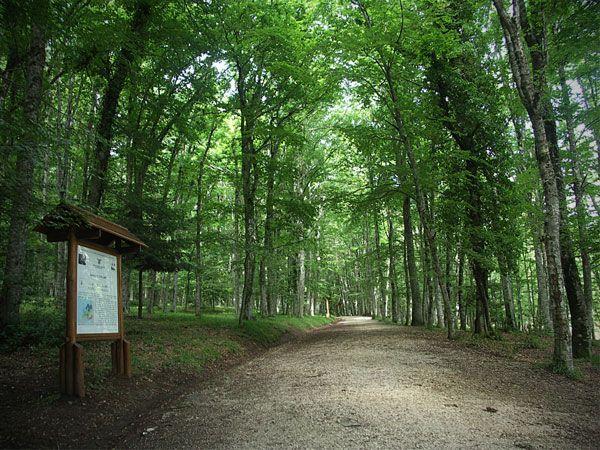 Festa Nazionale delle Riserve Naturali: escursioni guidate in Foresta Umbra il 10 maggio - http://blog.rodigarganico.info/2015/eventi/festa-nazionale-delle-riserve-naturali-escursioni-guidate-in-foresta-umbra-il-10-maggio/