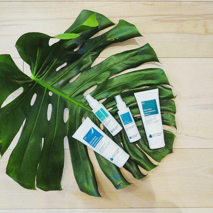 Continua il restyling del packaging Biofficina! 👢💍 Balsamo Concentrato e Maschera Balsamica ora hanno un packaging in linea con l'ultimo nato, il Balsamo Volumizzante 👒 anche i flaconi delle lozioni hanno subito un piccolo restyle ;) #ecobio #ecobiocosmesi #balsamo