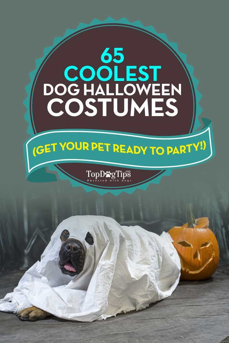 Best Dog Halloween Costumes. One of the most patently hilarious and cutest things ever is to dress your dog up in a costume. We love Halloween, and we always look for the best dog Halloween costumes to dress up our pets. I don't care what type of dog it is; all canines look adorable in dog costumes. #dogs #pets #halloween #costumes http://topdogtips.com/best-dog-halloween-costumes/