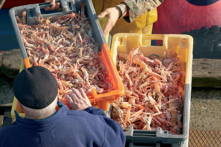 Pêche de langoustines au Guilvinec | Finistère Bretagne #myfinistere