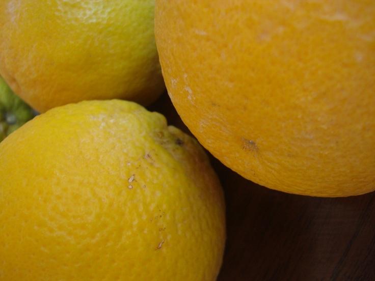 Pension Dafni breakfast: Oranges turned into a fresh orange juice!