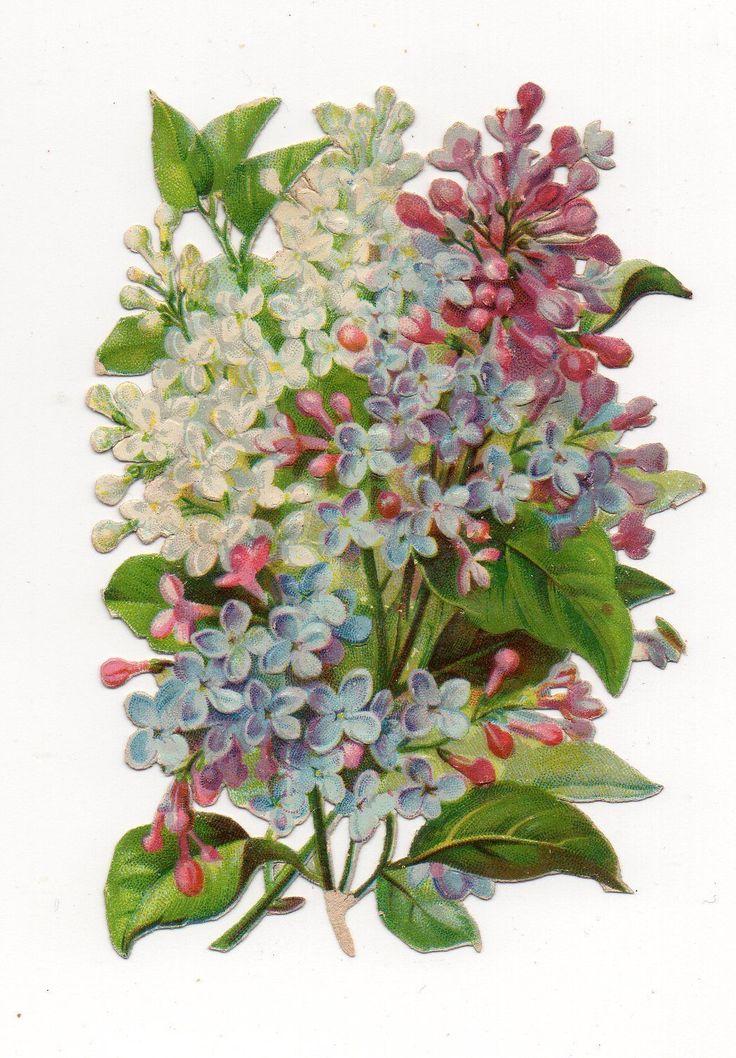 Chromo découpi oblaten glanzbild victorian die cut Fleurs Flowers Blumen   eBay