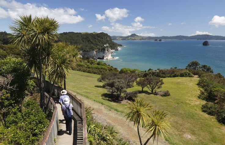 Coromandel Walkway - Stuart Black/Getty Images