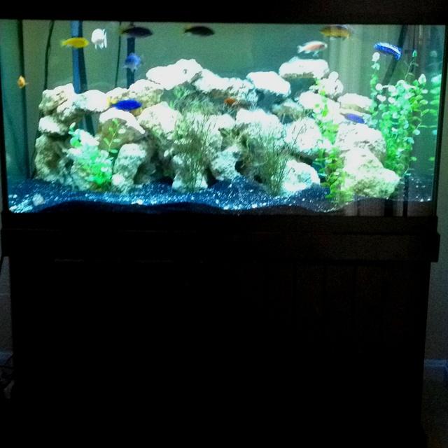 Freshwater fish 90 gallon fish keeping aquarium lighting for 90 gallon fish tank dimensions