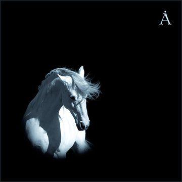 Лошадь Белая  - Аквариум I Борис Гребенщиков I БГ