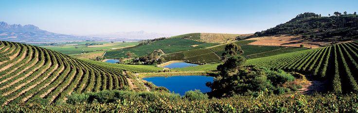 Fancy Restaurant - Stellenbosch