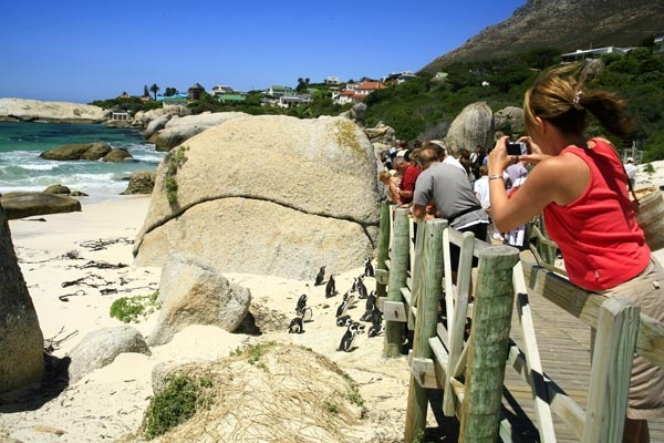 Viewing African Penguins from the Boardwalk at Boulders Beach, Simon's Town, Cape Town, South Africa Photo: Jeremy Jowell   Africa.. In Your Wildest Dreams  http://www.southernskyadventures.com/