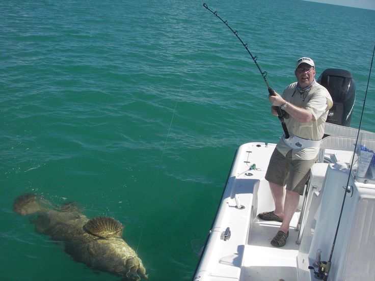 17 best images about fishing hook knots and fish on for Florida saltwater fishing