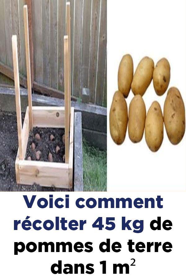 Voici remark récolter 45 kg de pommes de terre dans 1 m² !