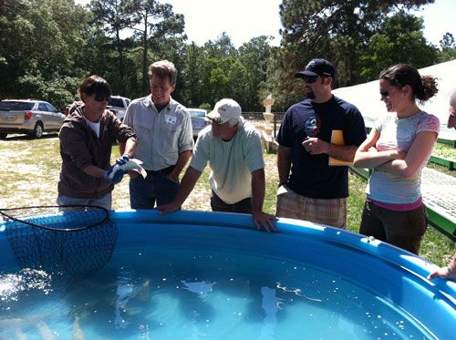 Commercial aquaponics training and why experience matters for Garden training pool