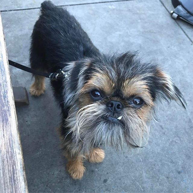 Theo went missing in San Jose CA on Feb 13th. Please help us by bringing Theo's flyer to your local vet, groomer, pet store, grocery store, starbucks, doggy daycare, or dog park. If you would like a PDF please message me your email or email me at trendee.king@gmail.com  Thank you so much #missing #missingdog #perroperdido #help #prayer #prayerwarrior #jesus #sanjose #santacruz #losgatos #menlopark #paloalto #campbell #saratoga #sunnyvale #morganhill #gilroy #santaclara #sanfrancisco #oakland…