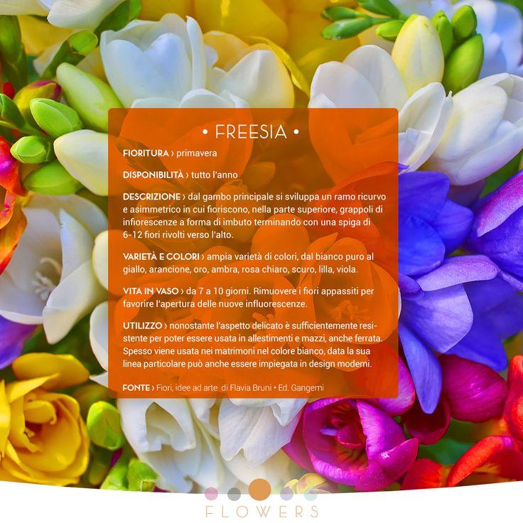 Oggi vi presentiamo la FRESIA, nome scientifico Freesia, fiore di primavera e simbolo di amicizia eterna.