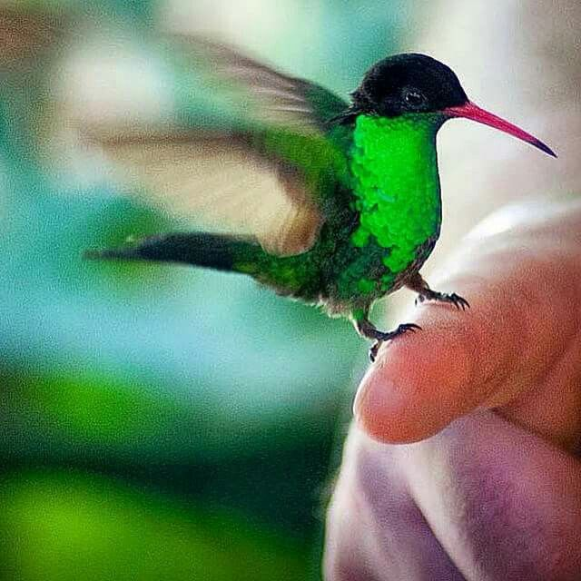 17 best images about tattoo on pinterest hummingbirds hummingbird tattoo and love tattoos. Black Bedroom Furniture Sets. Home Design Ideas