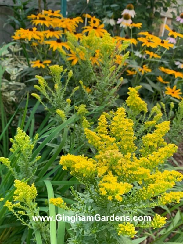Fall Flower Garden Inspiration Plus Decor Ideas Gingham Gardens Fall Flowers Garden Fall Flowers Fall Landscaping