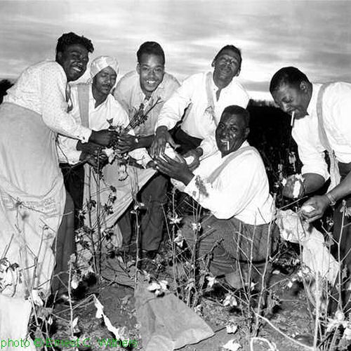 unknown, unknown (*not* Chico Chism!), James Cotton, Little Walter, Howlin' Wolf, unknown (might be Big Bill Hill!) in Brinkley, Arkansas, c. 1961; source: Ernest Withers & Daniel J. Wolff: The Memphis Blues Again: Six Decades of Memphis Music Photographs.- New York (Viking Studio) 2001; photographer: Ernest C. Withers