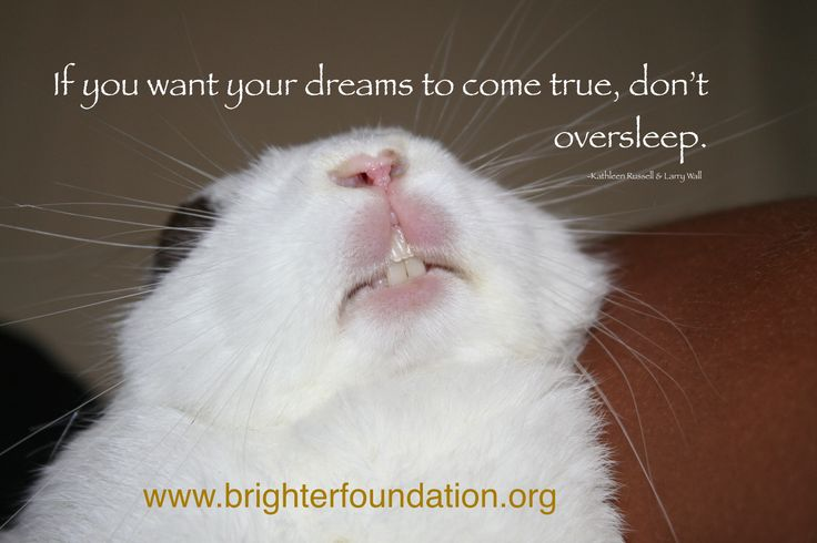Take time to nap, when you wake up follow... www.brighterfoundation.org
