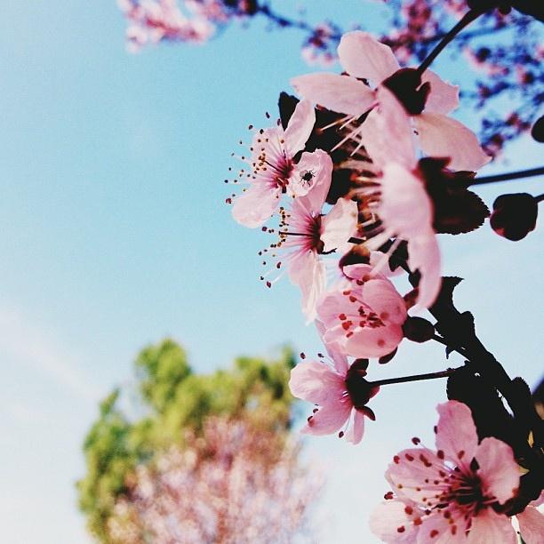 @ roro Cmon April, show us some springtime by Turismo Emilia Romagna, via Flickr