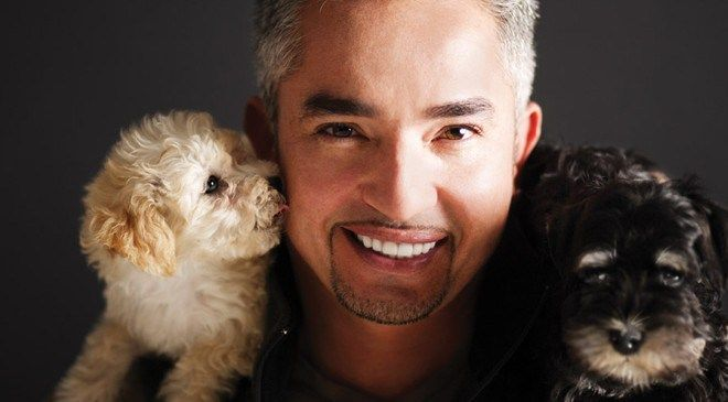 Cesar Millan death news is fake | Distrita