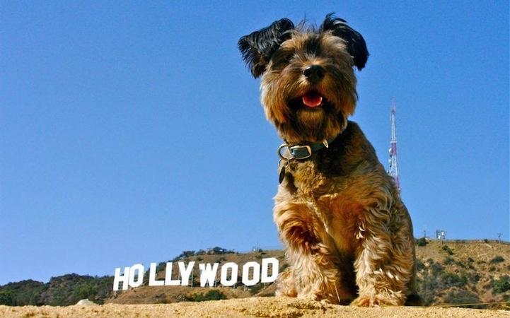 De Paris au Pérou : le premier chien globe-trotter au monde - Konbini - France