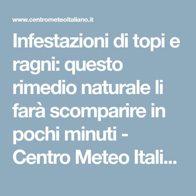 Infestazioni di topi e ragni: questo rimedio naturale li farà scomparire in pochi minuti - Centro Meteo Italiano
