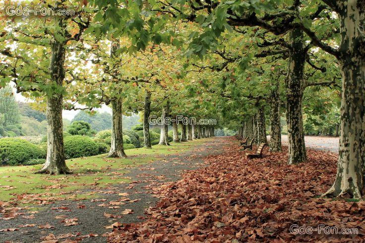 улица, осень, парк, дорога, город, деревья, листья, скамейки Скачать, картинка, изображение, фото, обои