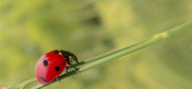 13 einfache Tipps für mehr Umweltschutz in deinem Garten.