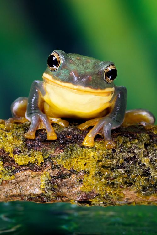 Small blue green frog on a stick by Mark Bridger