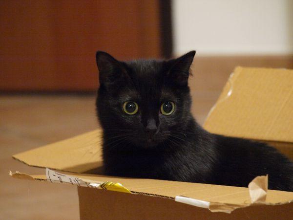 Perché i gatti amano le scatole di cartone?