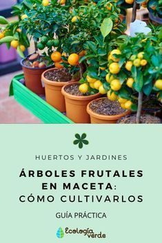 Potted fruit trees: how to grow them Eco Garden, Home Vegetable Garden, Garden Plants, Potted Fruit Trees, Plantation, Horticulture, Garden Projects, Backyard Landscaping, Gardening Tips