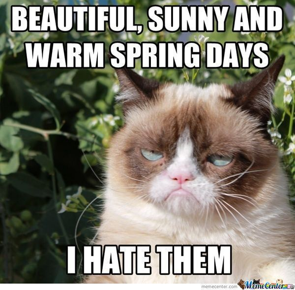 91221ad4a31398de96ad6aba50ebc076 grumpy cat meme grumpy kitty grumpy cat allergic to cat meme,cat best of the funny meme
