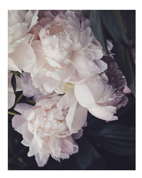 Zachte pioenrozen Fine art afdrukken  ~ pastel bloemblaadjes, mooie en delicate in de tuin.  Originele foto afgedrukt op kunst, archivering, premie speciaal fotopapier. 8 x 10 inch & groter afdrukken, kies dan een grootte van drop-down menu op de rechterbovenhoek. Beeld is Portret stijl (heeft groter dan brede afmetingen) Afbeelding heeft een extra slanke witte rand voor gemakkelijk matten en framing.  Zorgvuldig verpakt en verzonden in een stevige kartonnen mailing envelop of buis.  Gratis…