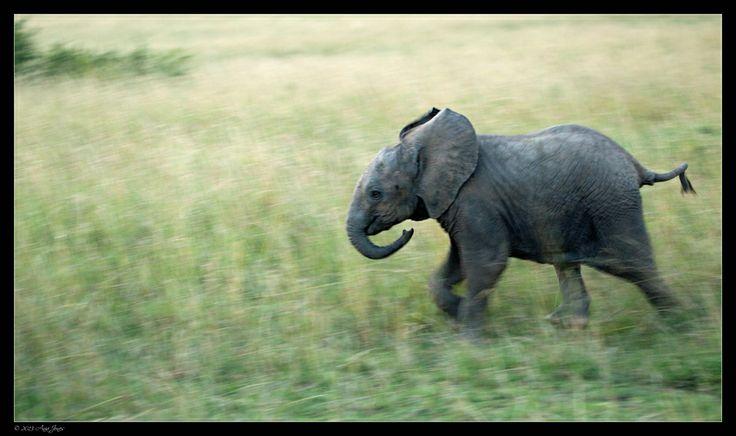 Run Little Baby, Run by Ania Jones on 500px Cute Elephant