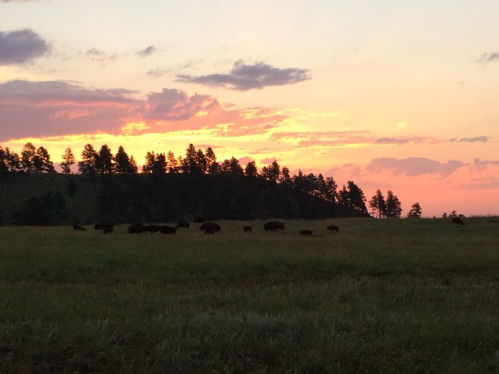 Custer State Park #SouthDakota #Sunrise