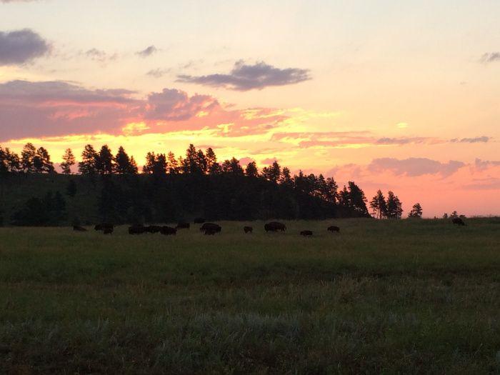 Custer State Park #SouthDakota #Sunrise