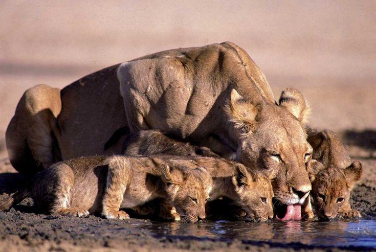 read: http://www.holidaybug.co.za/top-5-safari-destinations-in-the-world/