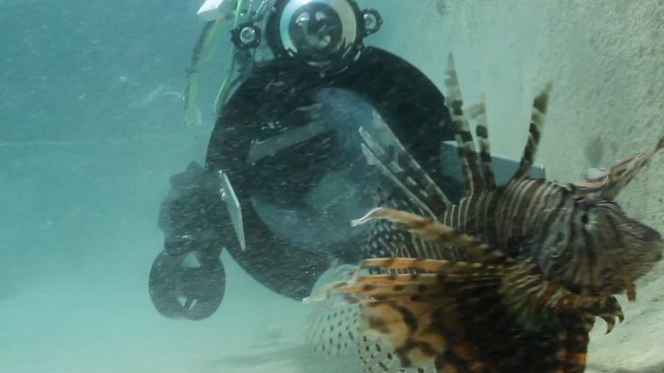The invasive lionfish poses a number of threats in the Atlantic Ocean – can it be stopped by a robot?
