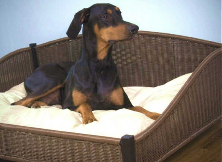 5 types of dog beds on sale that can meet any of your dog's needs > Click to read the article > http://dogsarena.com/5typ