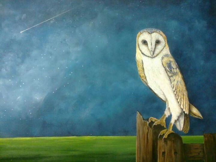 Barn owl in acrylic