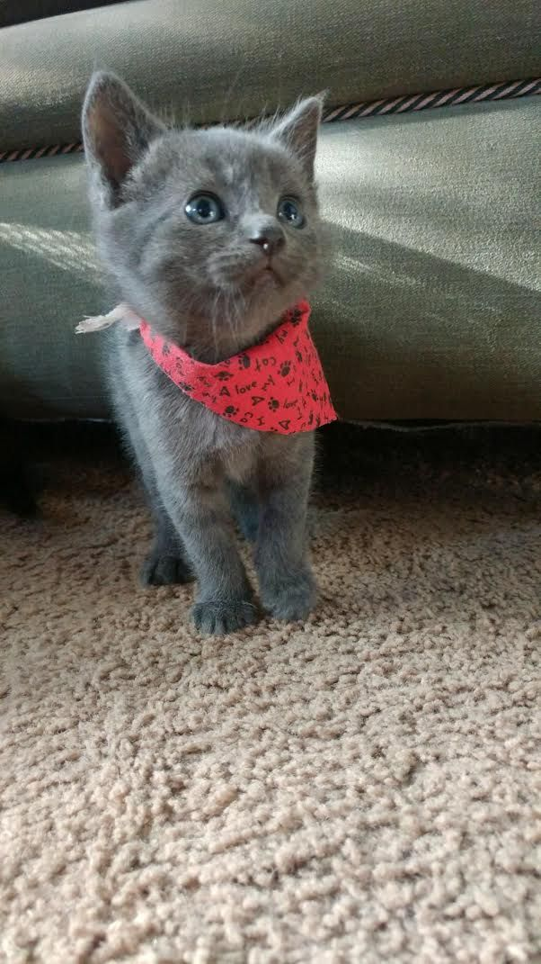 Diesel looks quite dashing in his little kitty bandanna http://ift.tt/2rEkimf