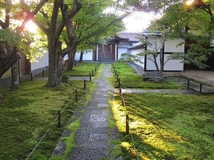 Ogrodniczka w podróży: Tajemnicze ogrody mchów i paproci w Japonii